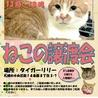 【札幌市】ねこの譲渡会
