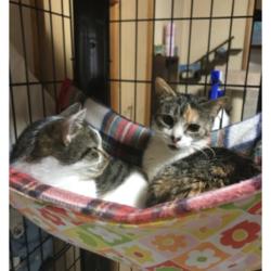3月31日、鶴ヶ島市内の動物病院にて犬猫里親会