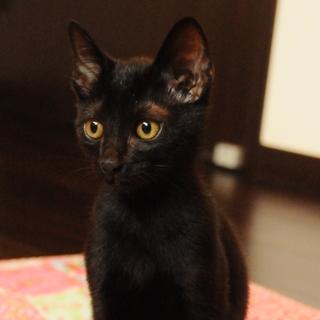 会えばみんな好きになる☆甘えた黒猫くん