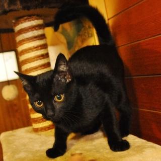 幸せ丸顔☆黒猫ちゃん