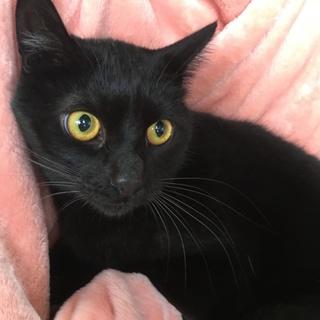 漆黒の美猫くんはしっぽふさふさ