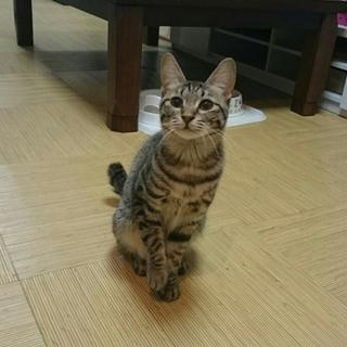 3/25 馬喰町会場☆心音(こね)ちゃん