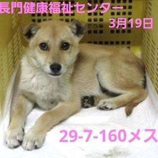怯えている生後3〜4ヵ月野犬の子犬【県外可】