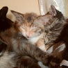 母猫が子猫達を攻撃する