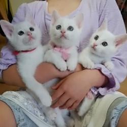 映画上映会&猫の譲渡会 三重県名張市