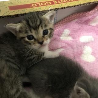赤ちゃん3匹