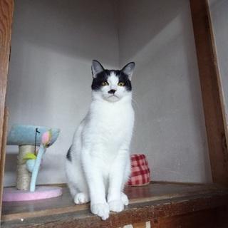 2016年に保護した猫