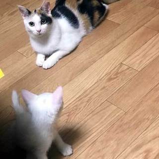 気まますぎる女子猫2匹