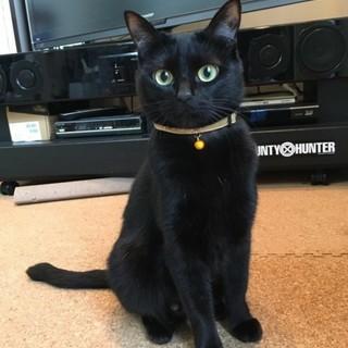 千葉県四街道市/ 可愛い黒猫女の子です