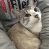 目がブルーの綺麗なオス猫くん