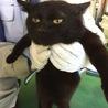 ベッタリ超甘えん坊!ぬいぐるみみたいな黒猫ちゃん。