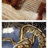 アダルトサイズの蛇