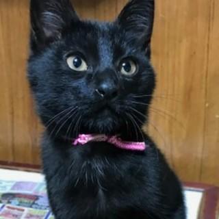 黒猫☆ハル君