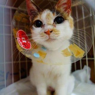 ★一生甘えさせて!訳アリの奇跡の美猫ケーコ★