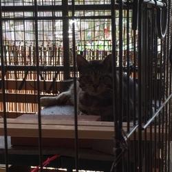 新たな訪問猫