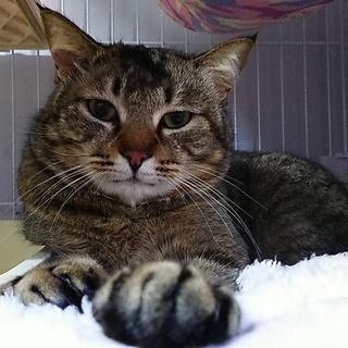 淡路島の猫7匹のキジトラ君