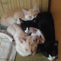 あっという間の6匹兄弟子猫の里親さん探し