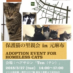 3月27日(火) 地域猫から社会猫へ FIPフリー 麻布十番里親会(ボランティア募集中)