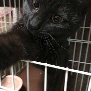 すごく美人な黒猫女子!