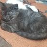 生後、5ヶ月になる子猫 サムネイル2