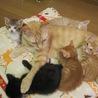 動画あり震災猫みんな大好き世話焼ききんちゃん サムネイル2