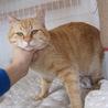 動画あり震災猫みんな大好き世話焼ききんちゃん サムネイル5