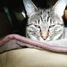 熟睡中は、瞬幕です