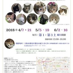 *子猫〜成猫里親会* サムネイル3