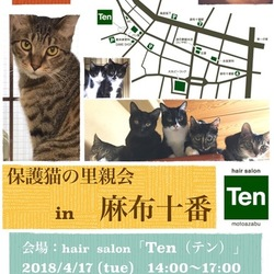 4月17日(火) 地域猫から社会猫へ FIPフリー 麻布十番里親会(ボランティア募集中)