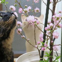 ふたり一緒に「はじめての」お花見しました!