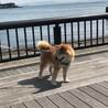 チョコと海! 散歩は楽しいね♪