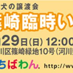 4月29日 篠崎臨時いぬ親会(東京都江戸川区)開催のご案内