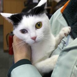 三重県桑名市4月8日(日)第78回リトルパウエイド猫の譲渡会