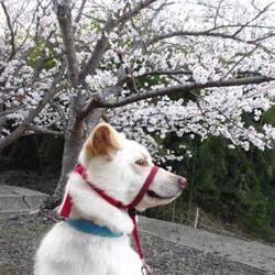 トレーニング日記0401&お花見散歩