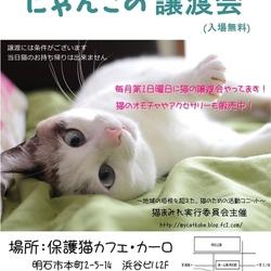 明石【にゃんこの譲渡会】猫まみれwithカーロ