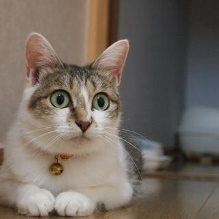 グリーンの瞳が美しい美人さん!避妊済♪