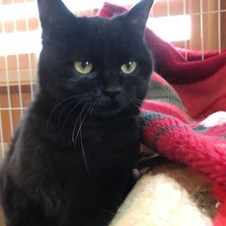 穏やかな黒猫ちゃんです♪