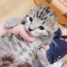 帝王切開で育児放棄した母猫と子猫についてです。