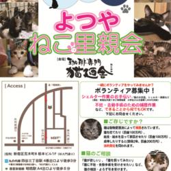 4月21日(土) 地域猫から社会猫へ FIPフリー 四谷猫廼舎 里親会(ボランティア募集中)
