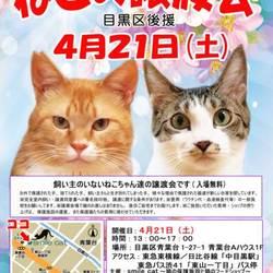 ★4月21日(土)「ねこの譲渡会(目黒区後援)」smile cat@中目黒(室内)