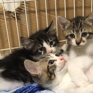 2/3産 子猫5匹(長毛系+短毛系)