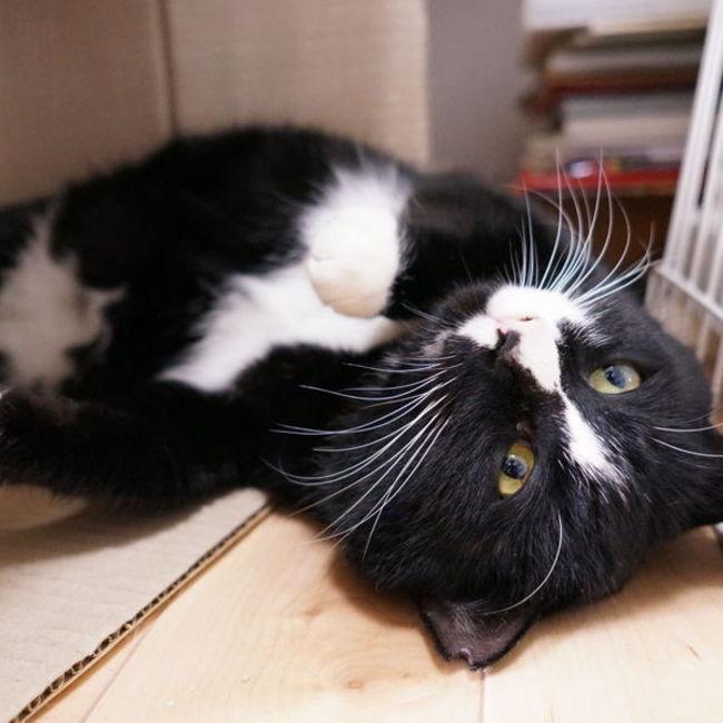 名古屋公園猫(ニャごや)のカバー写真