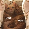 支え合って生きてきた親子猫  サムネイル2