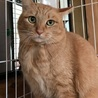支え合って生きてきた親子猫  サムネイル3