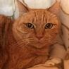 支え合って生きてきた親子猫  サムネイル4