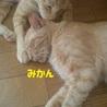支え合って生きてきた親子猫  サムネイル5