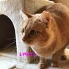 支え合って生きてきた親子猫  サムネイル6
