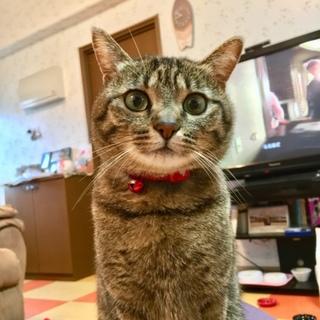 甘えんぼの猫ちゃんの新しいおうち募集