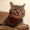 甘えんぼの猫ちゃんの新しいおうち募集 サムネイル7