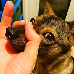 指で輪っかを作ると鼻を入れてくる子